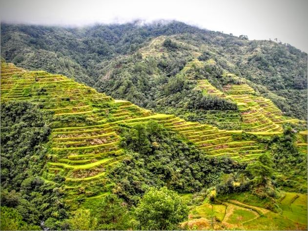 The majestic rice terraces in Banaue.