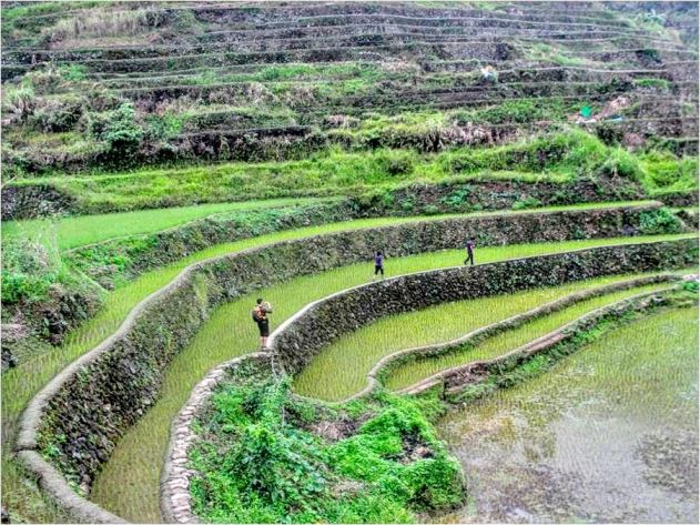Hiking the Banaue Rice Terraces.